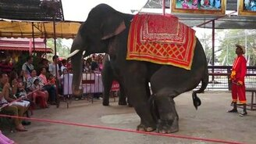 Слон пустился в пляс смотреть видео прикол - 1:01
