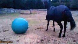 Смотреть Лошади играют с шарами и мячами