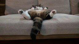Смотреть Как спит Мару