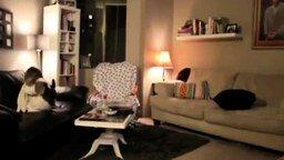 Когда собаки остаются одни дома смотреть видео - 2:04