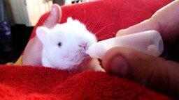 Смотреть Кормление крохотного кролика