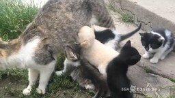 Смотреть Щенок хочет молока от кошки