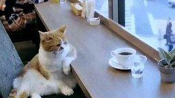 Смотреть Одинокий кот в ожидании