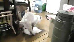 Смотреть Кот моет полы