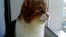 Кошачья реакция на птиц за окном смотреть видео прикол - 0:30