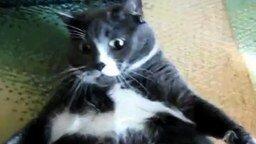 Кот-толстяк на взводе смотреть видео прикол - 0:29