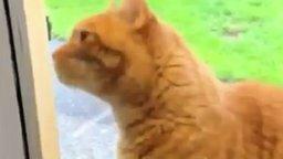Звонок для кота смотреть видео прикол - 0:44