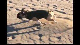 Бульдожик на пляже смотреть видео прикол - 0:15