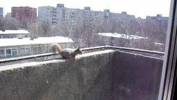 Смотреть Чудо-белочка на балконе