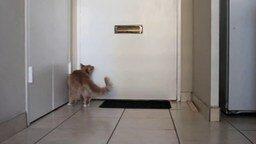 Кот страстно рвётся в коридор - зачем?