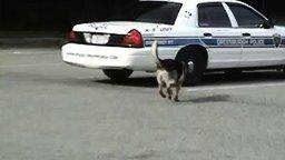 Смотреть Собака самостоятельно залазит в машину