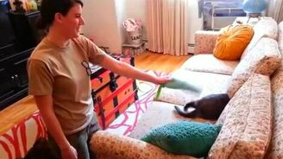 Смотреть Как кошки встречают хозяев после армии