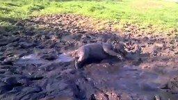 Смотреть Собака наслаждается грязью