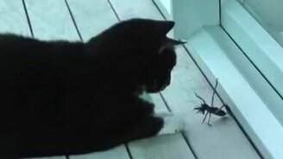 Кот против насекомого смотреть видео прикол - 0:58