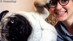 Смотреть Даже собака не любит селфи