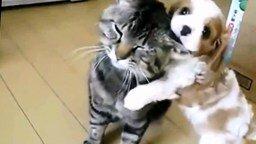 Смотреть Смешной щенок и инфантильный кот