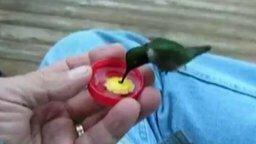 Смотреть Поит колибри с рук