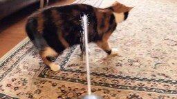 Смотреть Кот и водный пистолет