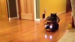Кот катается на самосвале смотреть видео прикол - 0:15