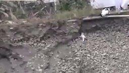 Смотреть Кошка спасла котёнка из ямы