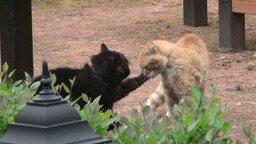 Кошачья драка с озвучкой смотреть видео прикол - 1:13