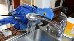 Попугай принимает душ на всю катушку смотреть видео прикол - 1:38