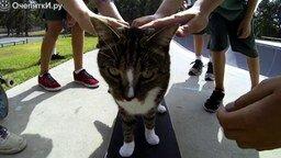 Смотреть Кот катается на скейте