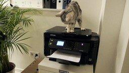 Офис с котами и кошками смотреть видео прикол - 1:10
