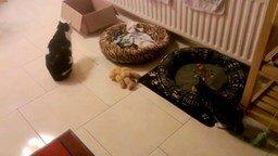 Смотреть Котёнок загнал себя в ловушку