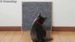 Пять идей для ваших котов смотреть видео прикол - 2:12