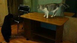 Докучливый енот против котяры смотреть видео прикол - 0:45