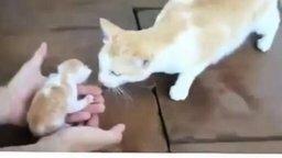 Смотреть Кошка беспокоится за котят