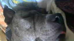 Смотреть Собака-просыпака