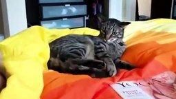 Смотреть Кот атакует самого себя