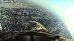 Смотреть Полёт орла на высоте