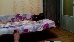 У меня кот - собака! смотреть видео прикол - 1:13