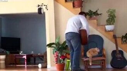 Смотреть Месть кота за отношение