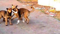 Кошачье бесстрашие в действии смотреть видео прикол - 0:32