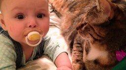Кошка вместо няни смотреть видео прикол - 0:34