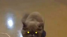 Смешной кот атакует смотреть видео прикол - 0:15