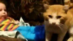 Смотреть Опытный кот и ребёнок