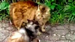 Смотреть Самый брутальный кот в районе