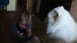 Самоед веселит девчушку смотреть видео прикол - 2:14