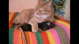 Смотреть Крыса и рыжий котяра