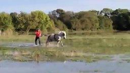 Смотреть Сёрфинг с лошадью