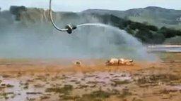 Смотреть Родео на пожарном шланге