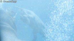 Смотреть Бегемотик учится плавать