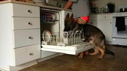 Смотреть Овчарка-посудомойка