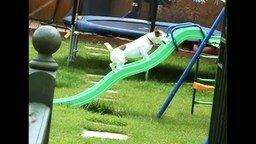 Смотреть Весёлые собачьи провалы