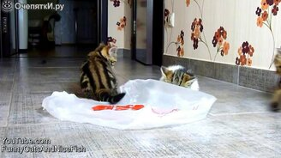 Смотреть Котята-бесенята